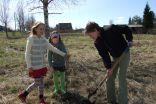 Kociņu stādīšana Medņevas pagastā.