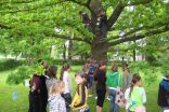 Pupils` creative ideas find their place in the oak brances in the front of the school