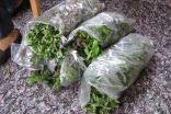 Vietējos dārzos audzētas piparmētras smaržo vislabāk!